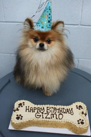 Three Dog Bakery Special Order Birthday Cakes